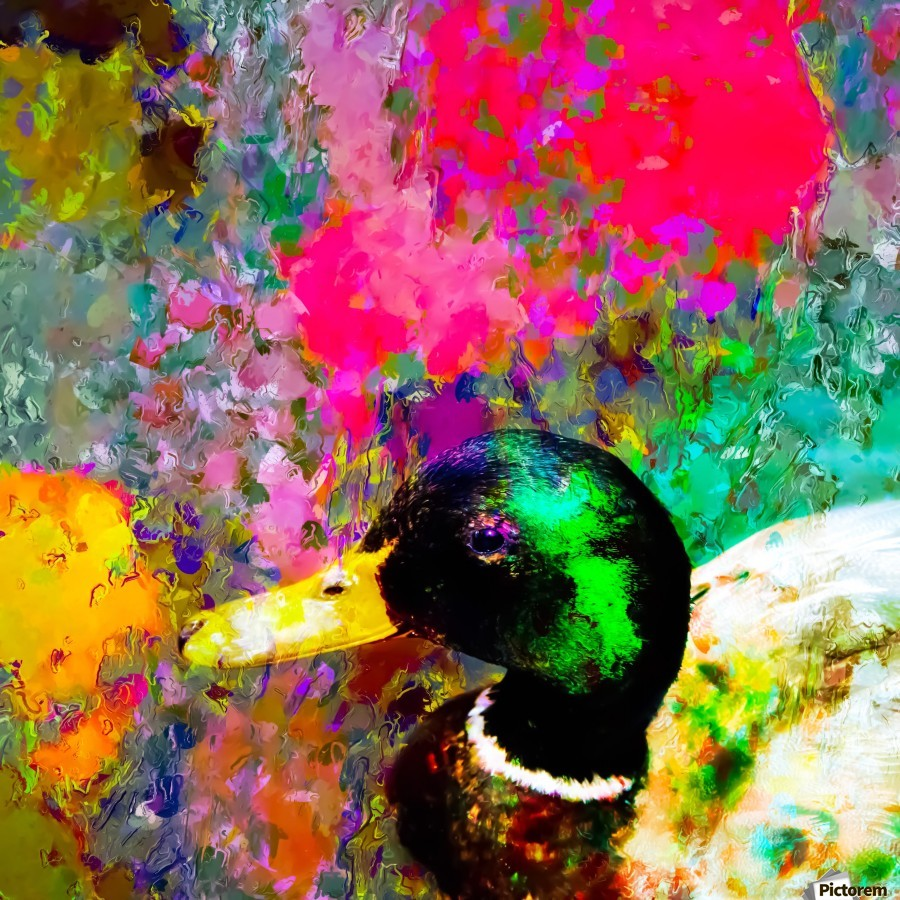 mallard duck with pink green brown purple yellow painting abstract background  Print