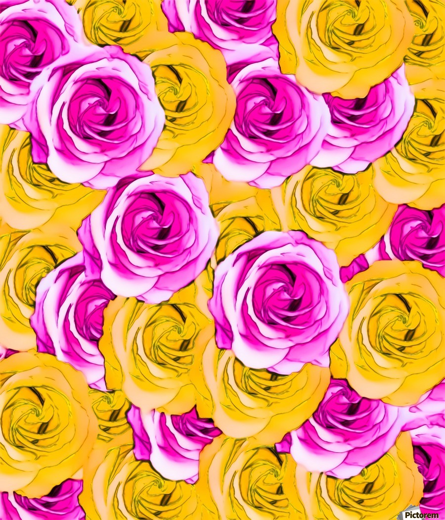 pink rose and yellow rose pattern abstract background - TimmyLA Canvas