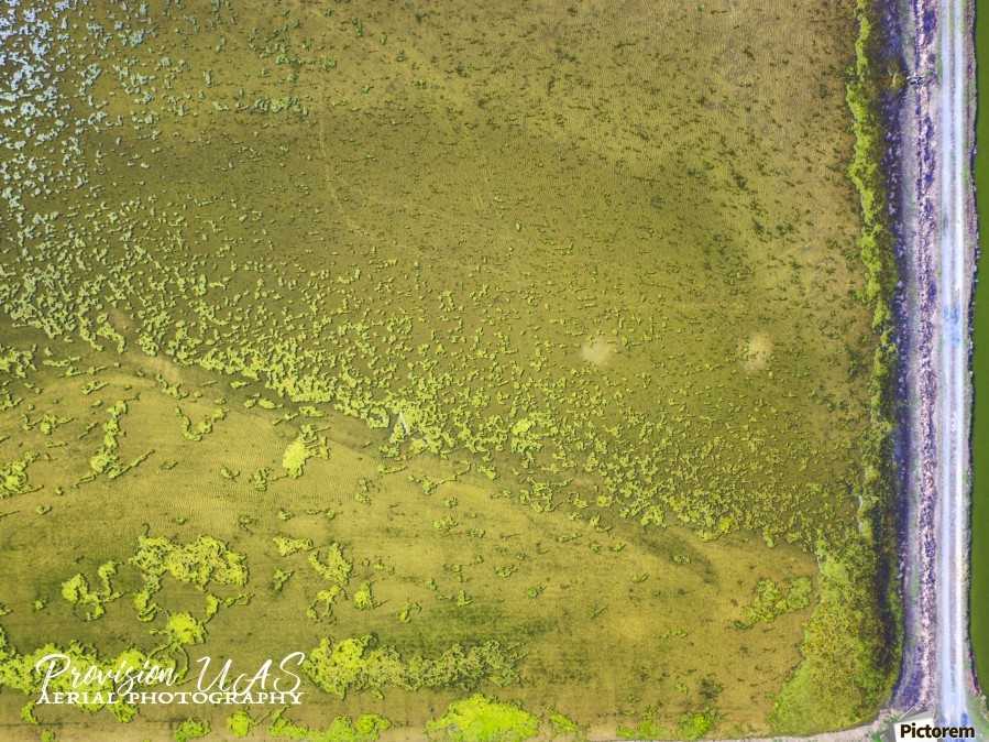 Fish Pond Algae  imprimons
