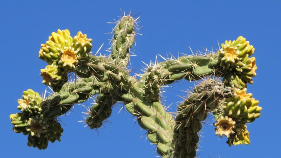 Cactus in bloom  Print