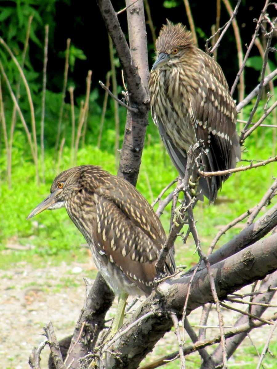 Birds in Lincoln Park   Print