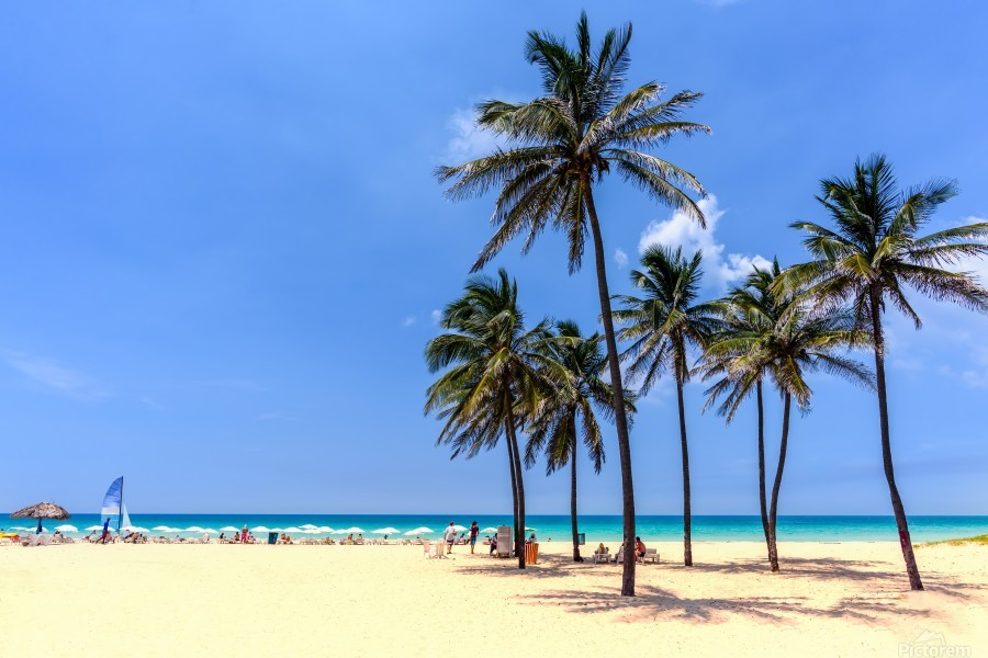vacation on the beach on the hot Caribbean islands with green palms, yellow sand, blue sky  Print
