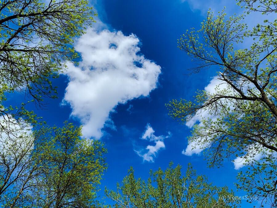 Bliss a Sky   Imprimer