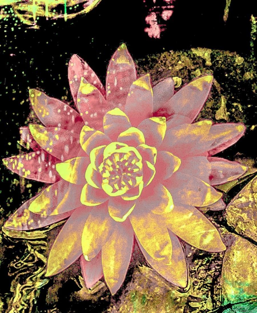 Pink fire lotus   Imprimer