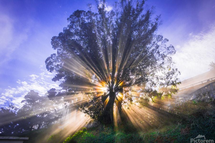 Rays of Light  Print