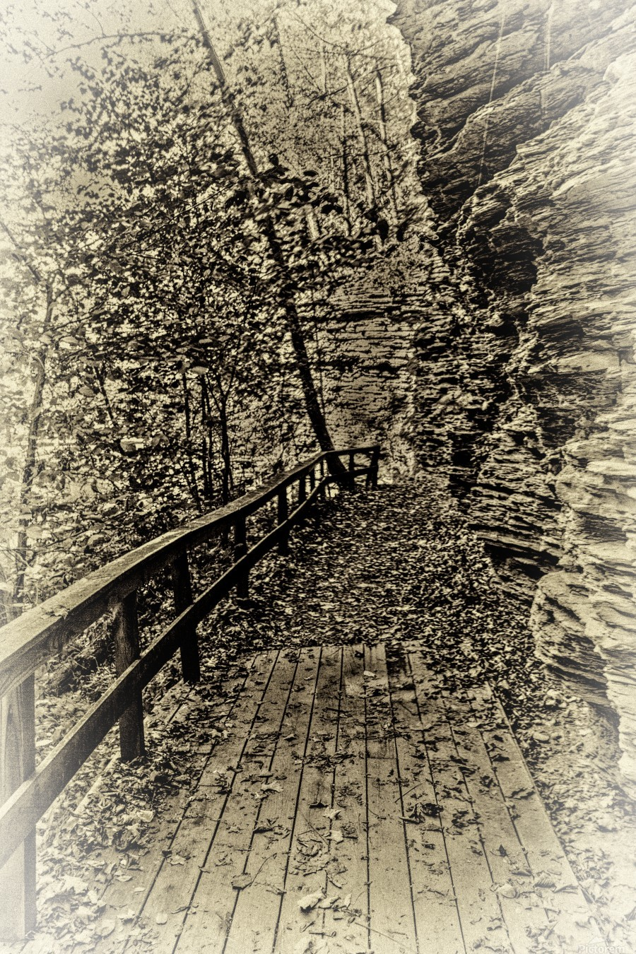 Pathway in Sepia  Print