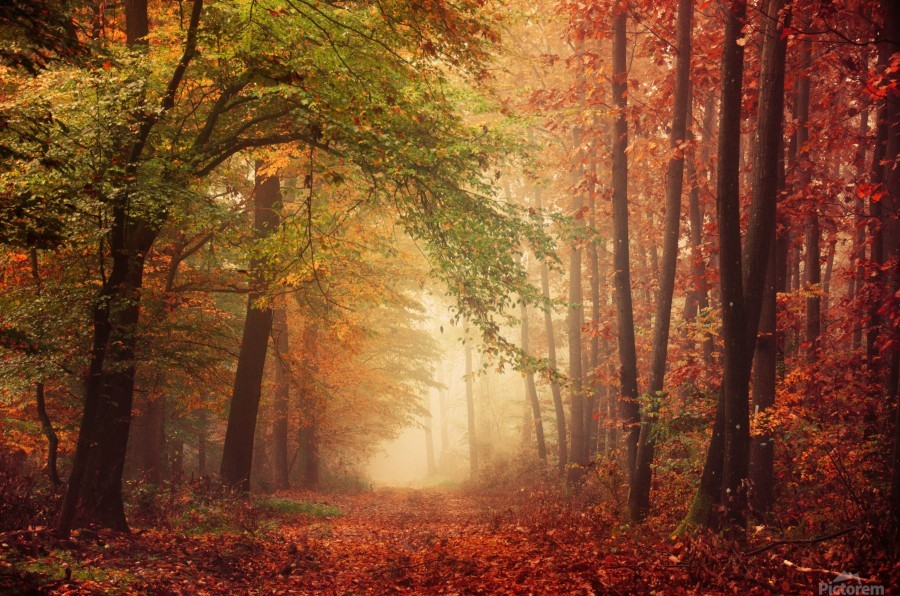 Colorful autumn forest  Print