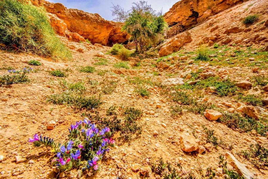 Grotte Sahara  Print