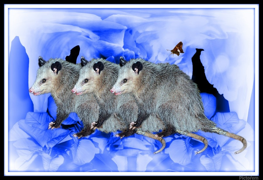 Party Of Possums  Print