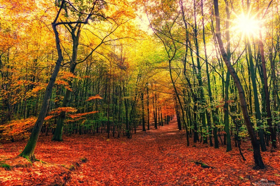 Autumn Away Leaves Colorful Sun Nature Forest Landscape
