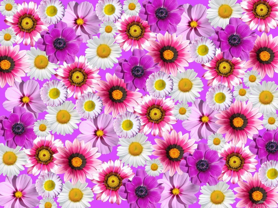 Beautiful colourful flower blossom flower background design floral home decor decoration   Print
