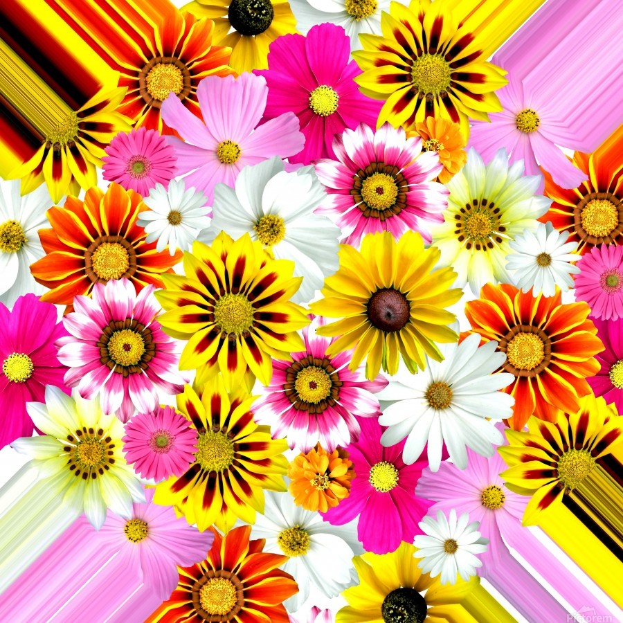 Beautiful Colourful Flower Blossom Flower Background Design Floral