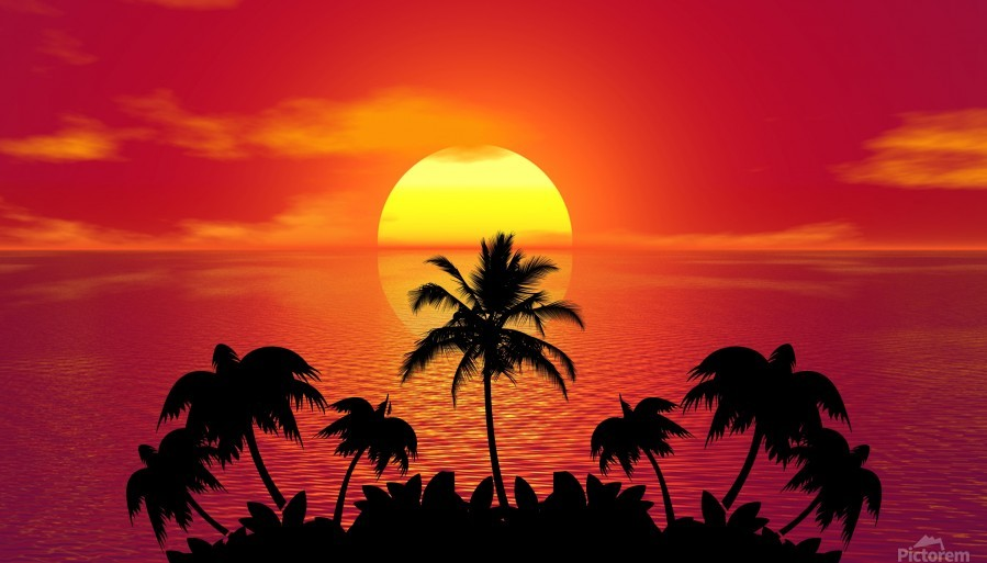 tropical sunset summer sun palm tree hot climate night  Print