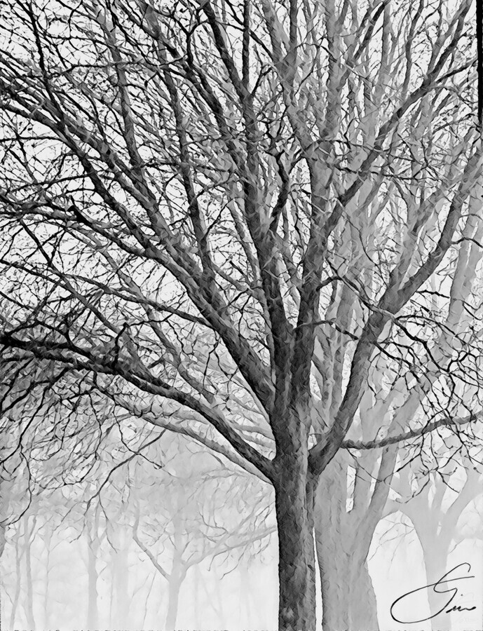 Trees in the Mist  Print