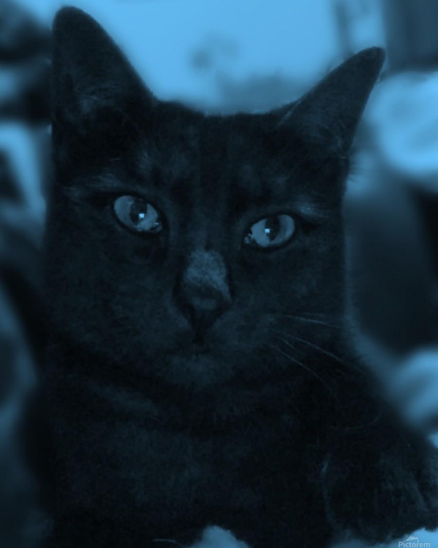 black cat in blue  Print