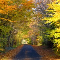 Rural Road, Argyll And Bute, Scotland