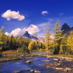 A Scenic Creek