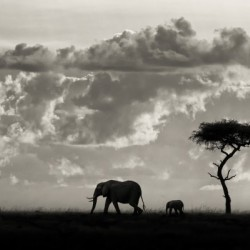 Silhouettes of Mara