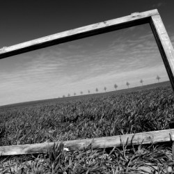 photography canvas