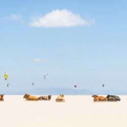 COWS AND KITES