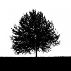 Silhouette of a lonely tree