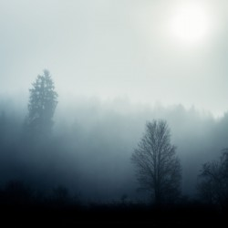 Sunrise in the misty forest
