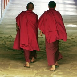Monks at the temple