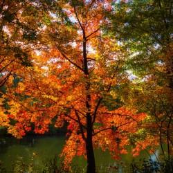 A fall colors tree
