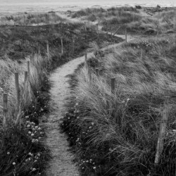 Path to the Sea