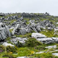Rock Field II