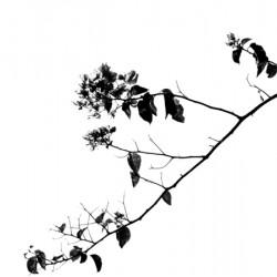 Tree Branch II