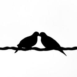 Doves Flirting