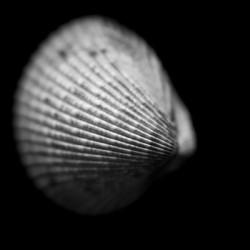 Series of shells