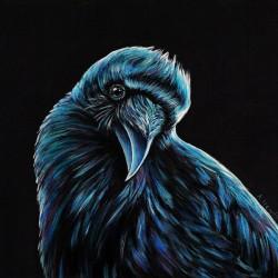 Curious Raven