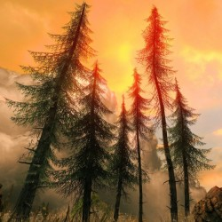 Pine Woods Sunset Fantasy