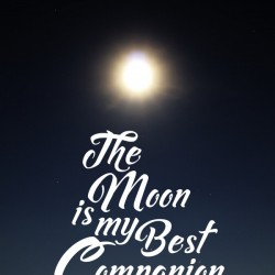 The Moon is Best Companion
