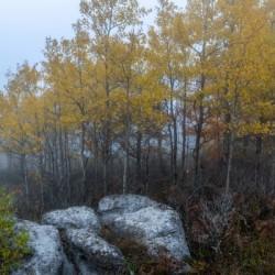 Aspen in Fog apmi 1820