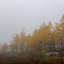 Aspen in Fog apmi 1830
