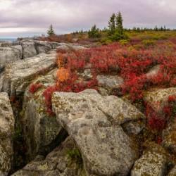 Bear Rocks Preserve apmi 1790