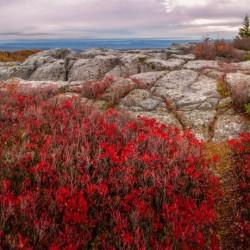 Bear Rocks Preserve apmi 1792
