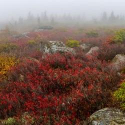 Bear Rocks Preserve apmi 1803