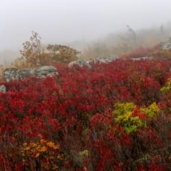 Bear Rocks Preserve apmi 1806