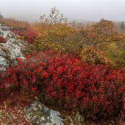 Bear Rocks Preserve apmi 1815
