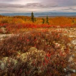 Colors of Nature apmi 1782AL