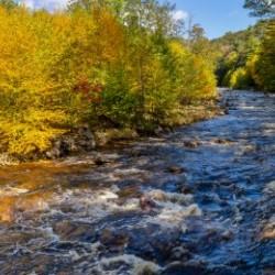 Red Creek Aspens apmi 1769