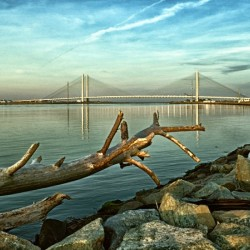 Indian River Bridge with Driftwood