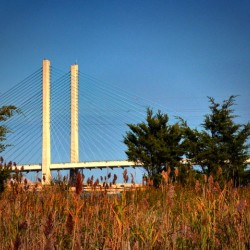 Indian River Bridge Stanchions Standing Tall