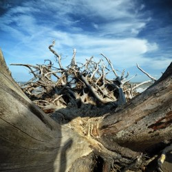 Eroticism at Driftwood Beach on Jekyll Island
