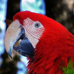 parrot macaw in trees 0651