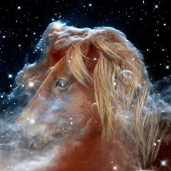 Horsehead Nebula with Horse Head in Space